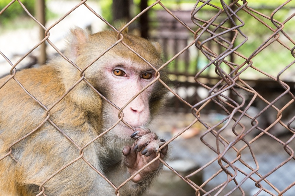 animal welfare in zoos